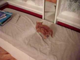 Gato mirándose al espejo