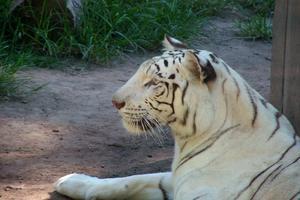Tres curiosidades sobre el mundo animal