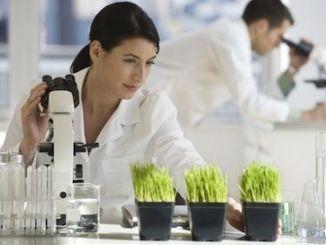 materias primas homeopatia