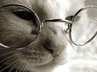gatito viejo2