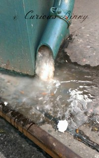 Curious NYC: Frozen Drain Pipe  CuriousBinky