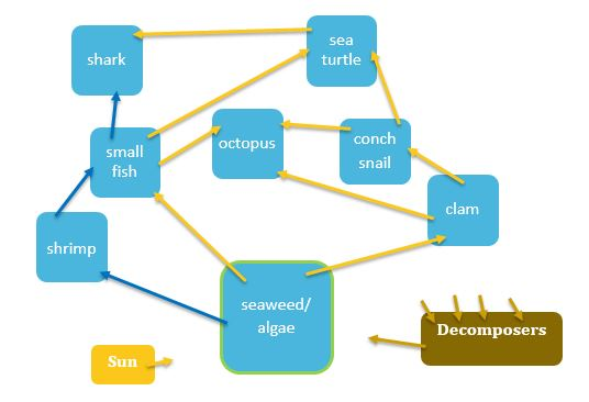 3-5 Food Chains and Webs - South Carolina Aquarium Online Curriculum
