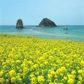 Weather in Jeju-do