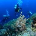 Diving in Bohol