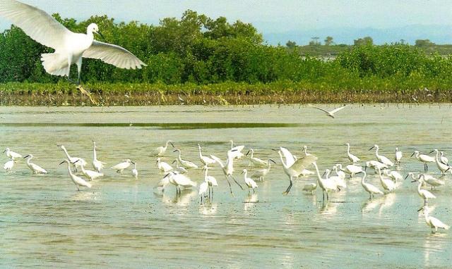 cebu olango island group Olango island - lapu-lapu city, cebu unbeknown to many, olango is actually a group of islands and islets, olango island being the most popular.