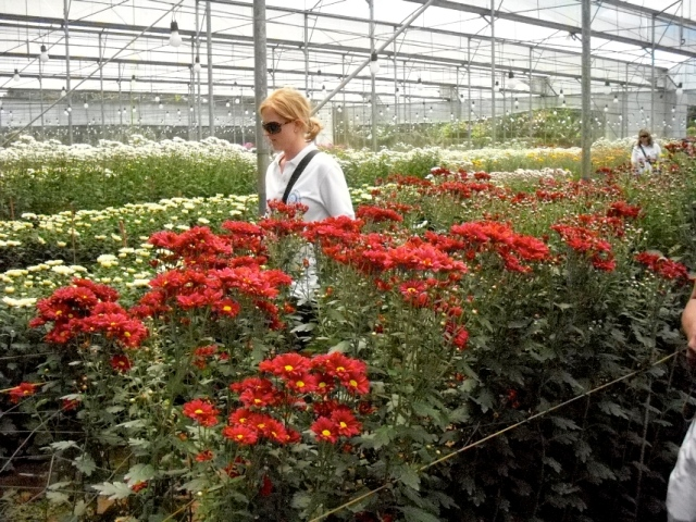 Flower Farm in Tagaytay