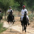 horse riding, activity, udaipur