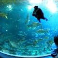 aquarium, chiang mai, thailand