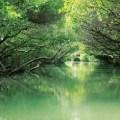 taijiang national park, tainan, taiwan