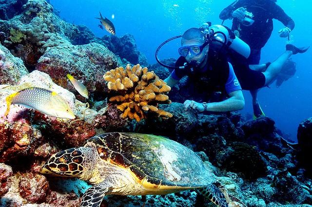 lions head, maldives, diving spot