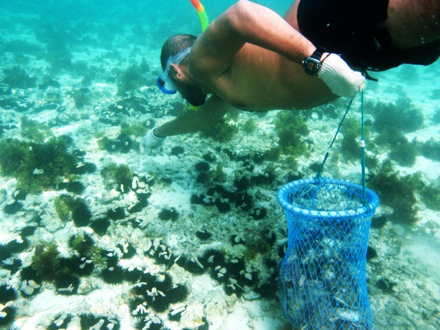 pearl diving, bahrain, activities