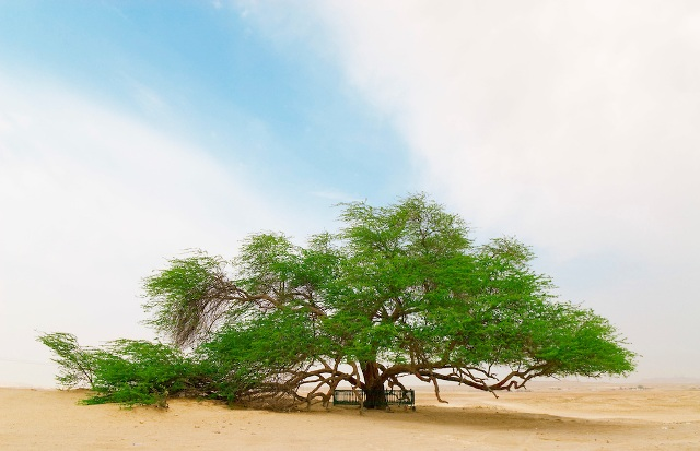 tree of life, bahrain, bahrain attractions