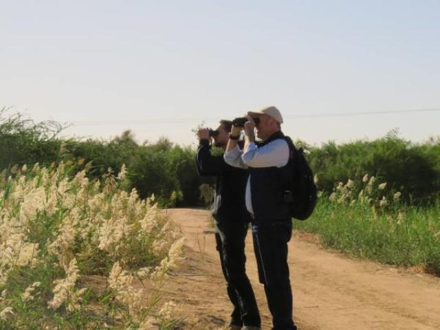 bird watching activity, jordan, aqaba
