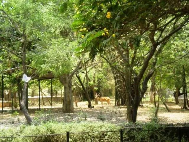 guindy national park, chennai, india