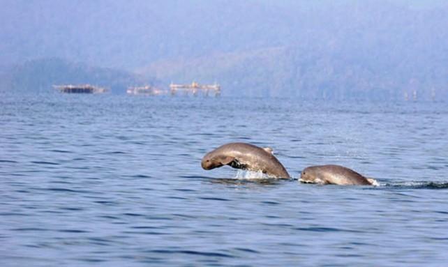 dolphin, palawan, sanctuary,