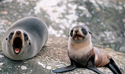 Cute Otter Wallpaper Top 20 Cutest Baby Seals Cute N Tiny