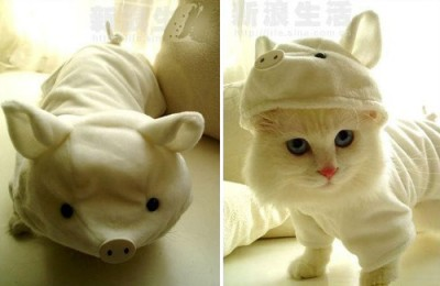 Halloween Pet Costumes Cute N Tiny
