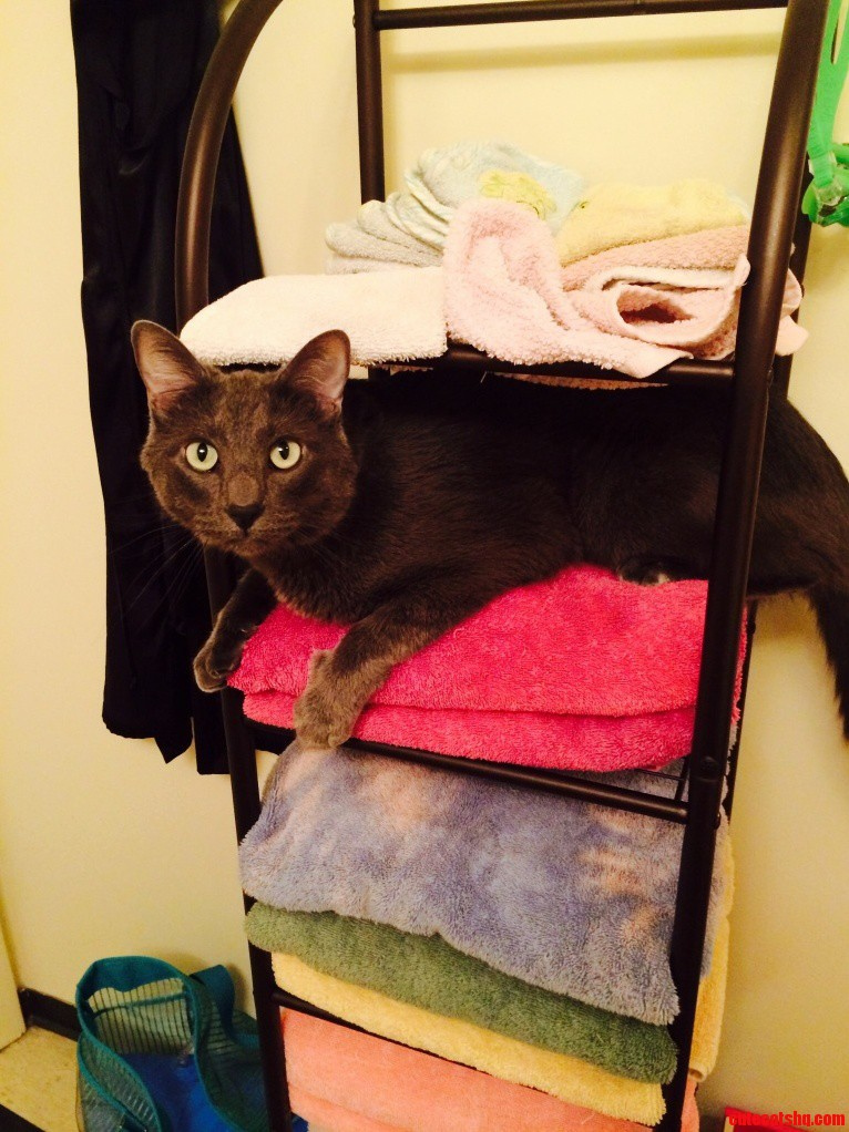 King Of The Towel Rack I Ll Air Dry Today Cute Cats Hq