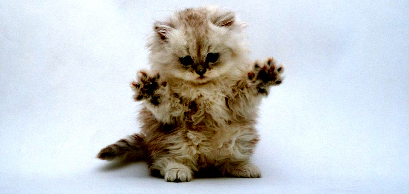 Wallpapers Clean Cute Desktop Surprise Did I Scare You Cute Cats Hq Pictures Of Cute