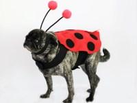 20+ Adorable DIY Pet Costume Ideas for Halloween 2017