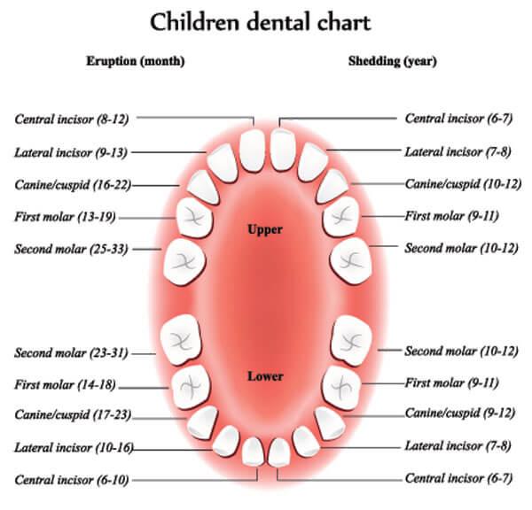 Pediatric Dentist General Dentist for Kids Kid\u0027s Dentist