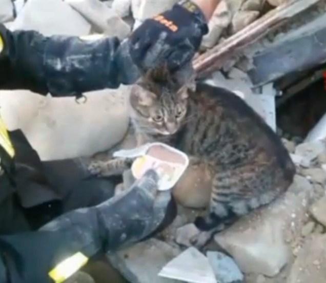 quake-cat