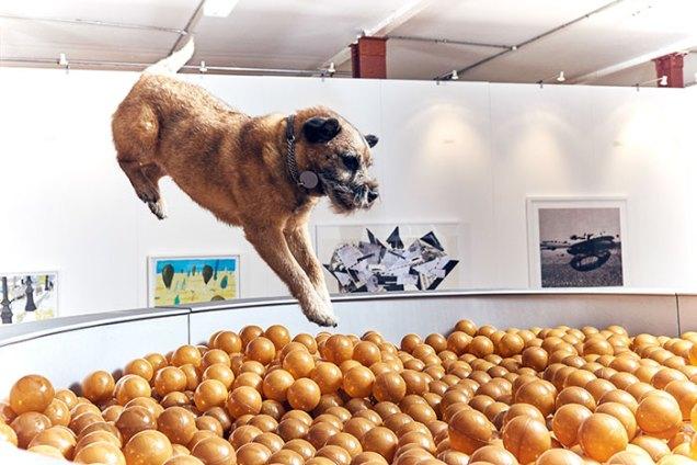 world-first-dog-art-exhibition-dominic-wilcox-london-2