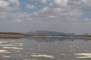Lake Magadi as seen on the drive across the causeway towards Magadi town, and beyond