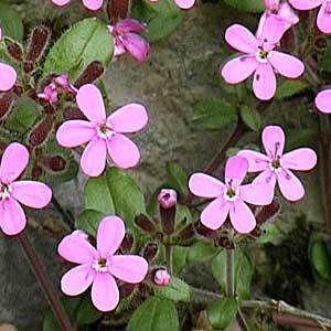 1000 Wallpapers Cute Vanjsko Cvijeće Cvijeće