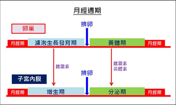臺灣的婦女有福了!天然的黃體素不會增加乳癌的機率-王馨世-康健名家觀點
