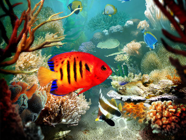 Tropical Fish 3D Screensaver 1.2 build 8   ????????????