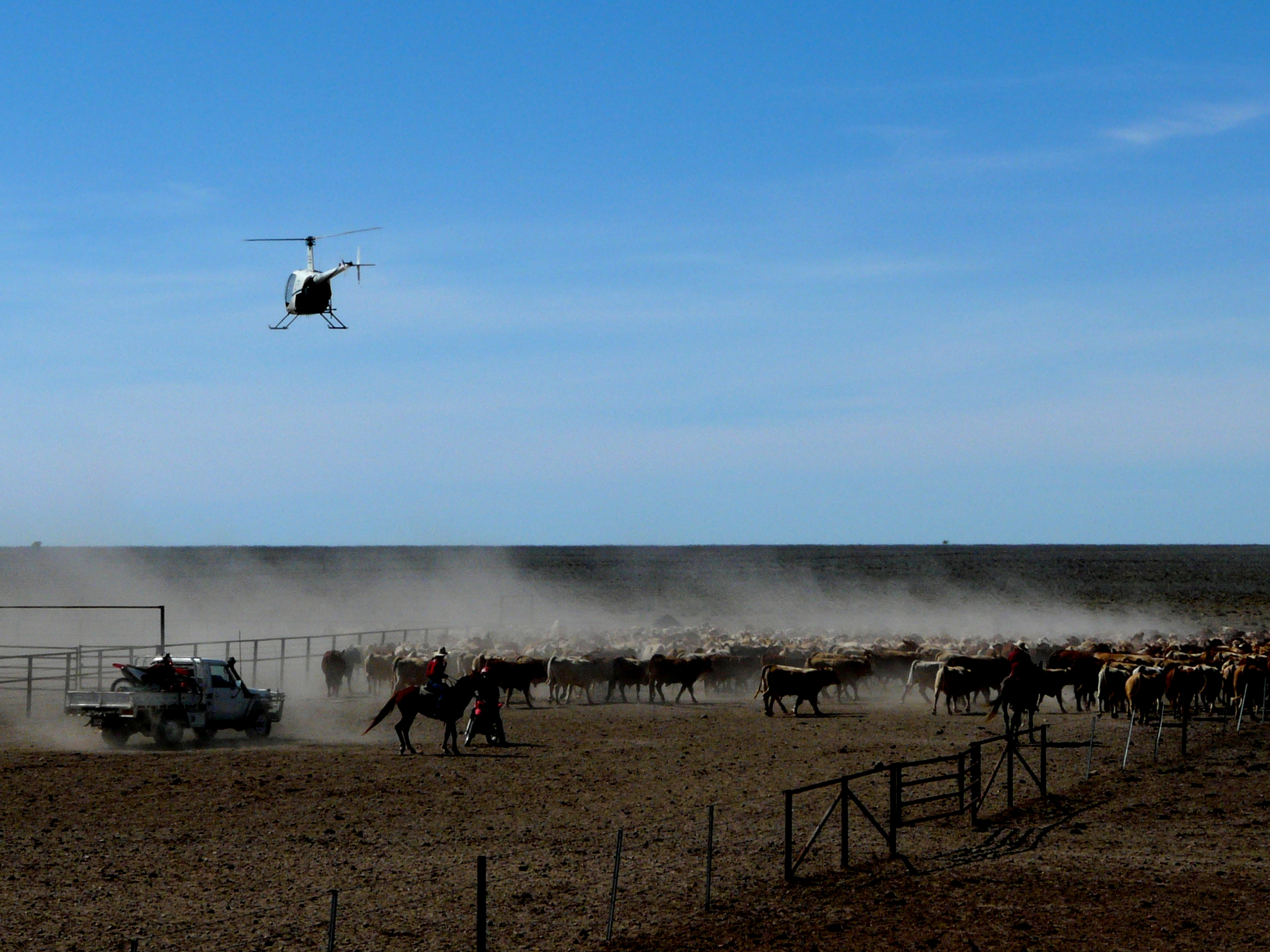 Mustering Jobs Australia Mustering Cattle On Brunette Downs Cycling To The Ashes