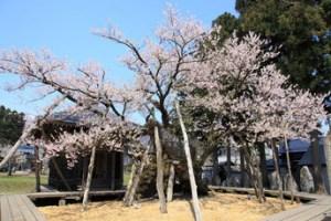 引用元:http://yu-hana-ken-kazu-mic.blog.so-net.ne.jp/