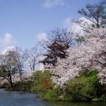 新潟県 上越周辺で春を満喫する日帰り旅はこちらからどうぞ