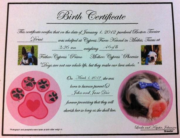 Dog Birth Certificate Template Puppy birth certificates C\Ju0027s Pup - best of pet health certificate template