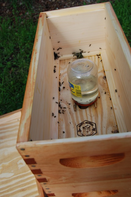 Ants in a honey bee hive (nuc)