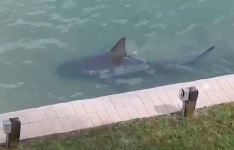 Wallpaper Fall Out Boy Florida Shark Attack Victim Stable Despite Bite To The Head