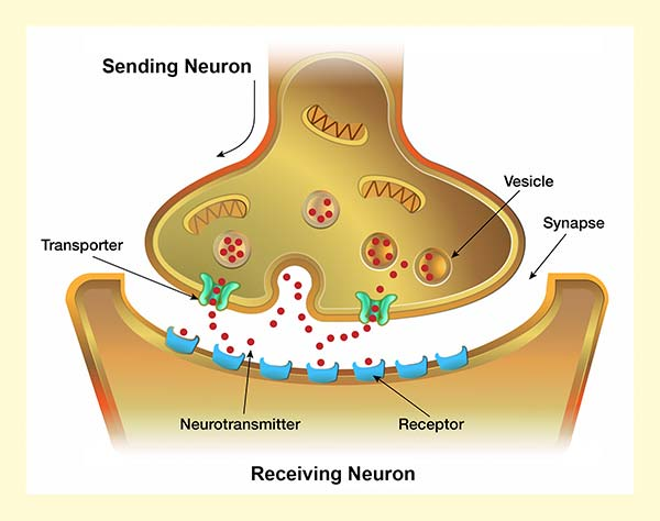 Impacts of Drugs on Neurotransmission National Institute on Drug
