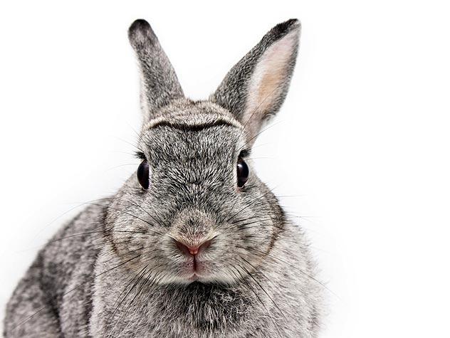 Do Rabbits Make Good Pets? Petfinder