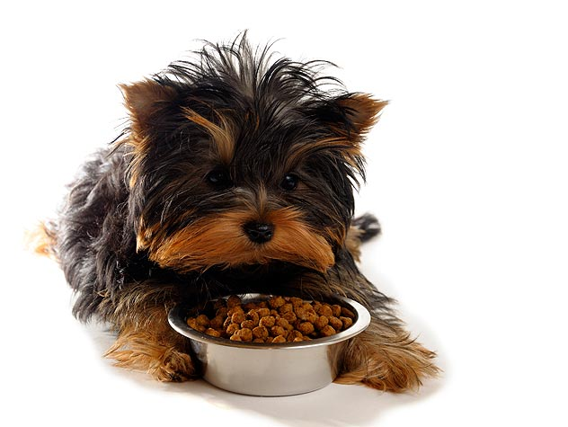 How Much Should You Feed Your Dog? Petfinder