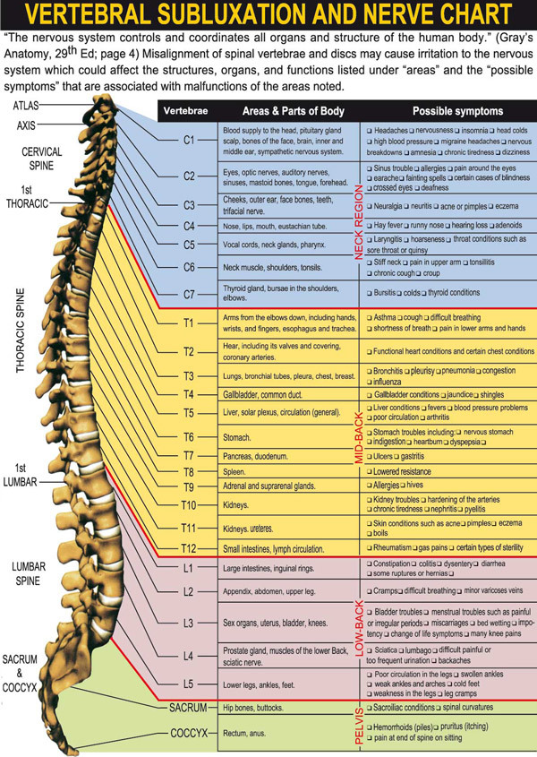 Vertebral Subluxation and Nerve Chart on Meducation