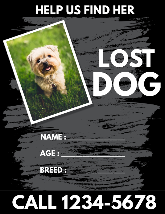Lost dog flyer Template PosterMyWall