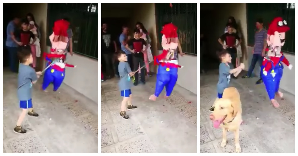 Dog Vs Pinata Familypet