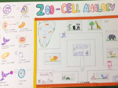 NGSS- Life Science- High School- developing models- Cell Organelles