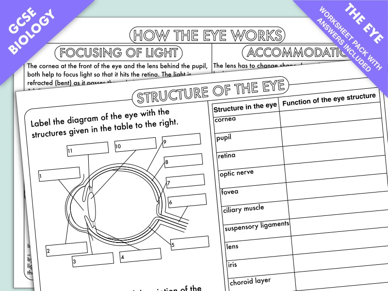GCSE Biology The Eye by beckystoke - Teaching Resources - Tes