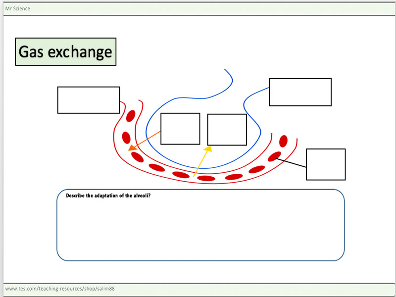 Gas exchange worksheet by mr_science - Teaching Resources - Tes