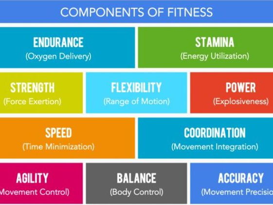 components of fitness - Minimfagency - components of fitness