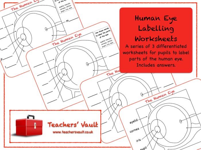 Human Eye Labelling Worksheets by helenrachelcrossley - Teaching