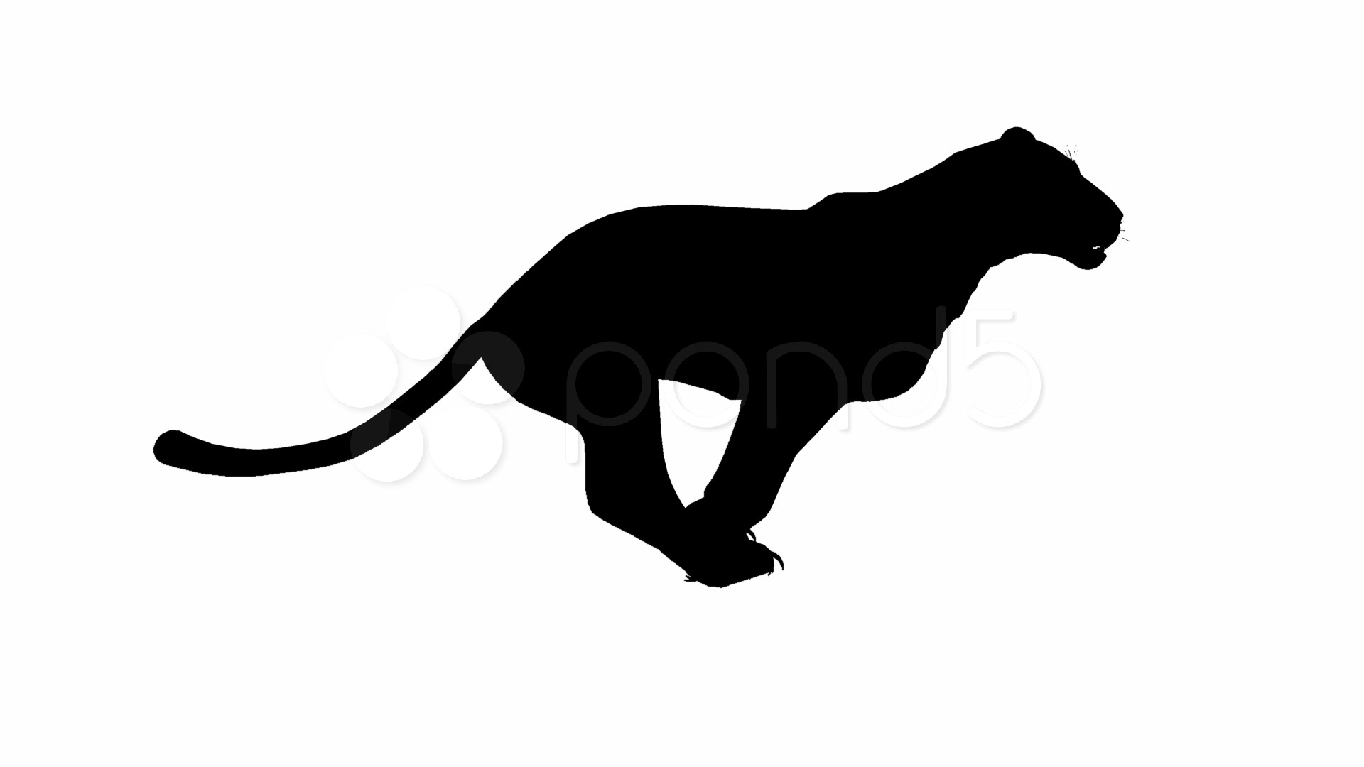 Animated 3d Wallpaper Gifs Looping Looping Jaguar Panther Leopard Puma Animation With