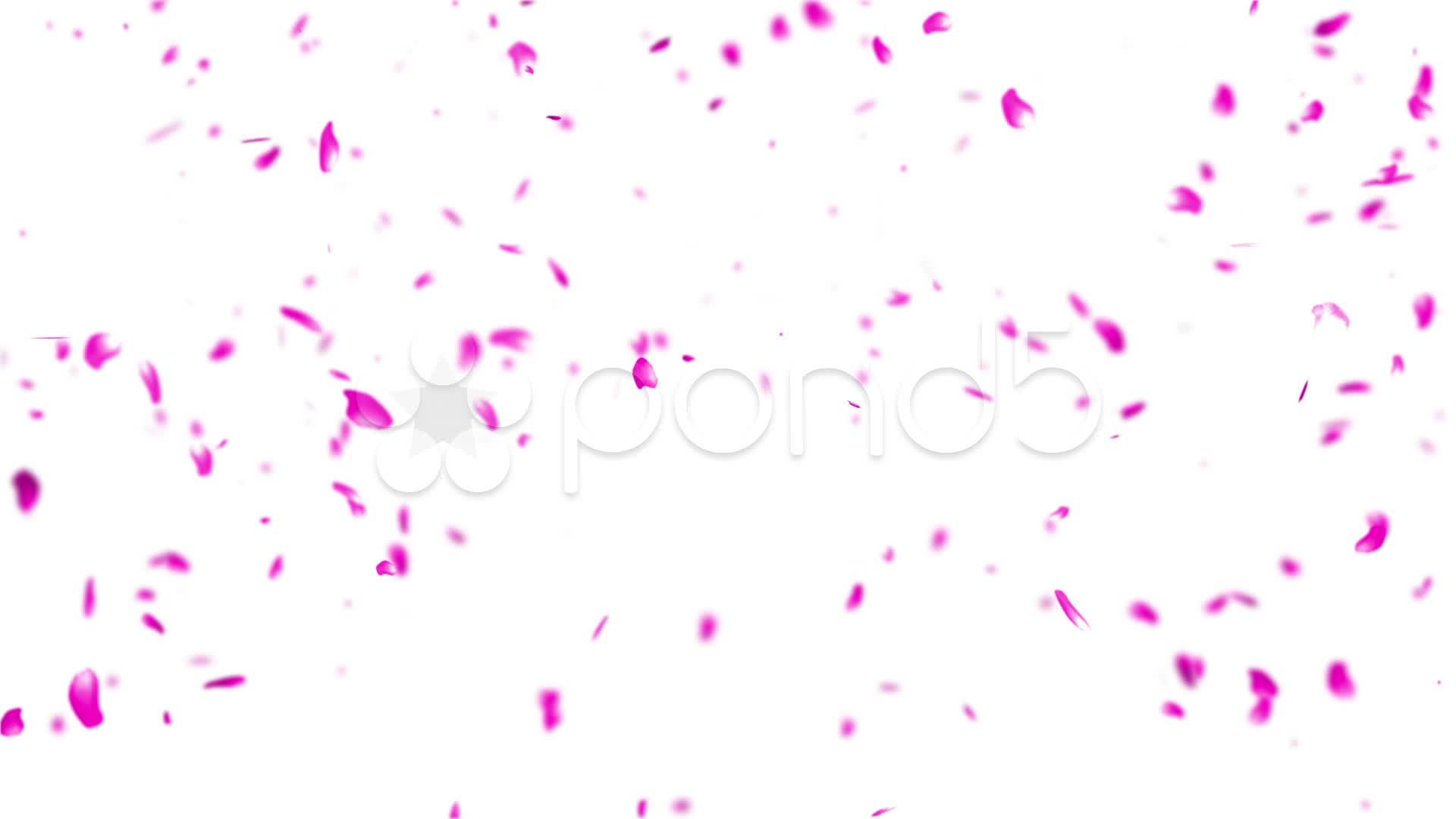 Animated 3d Wallpaper Gifs Looping Falling Sakura Petals Cherry Blossoms Dof Hi Res 21372761